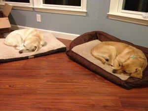 Good Night Otto and C.J.