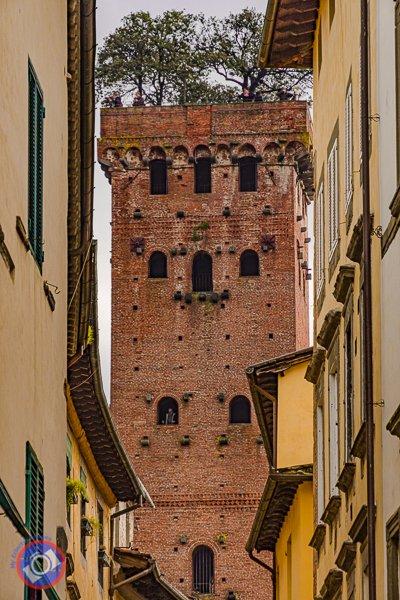 Torre Guinigi in Lucca (©simon@myeclecticimages.com)